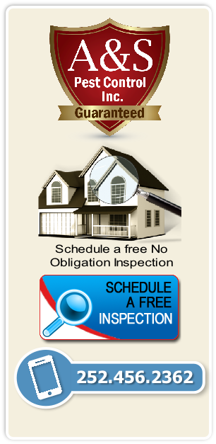 Schedule a free No
